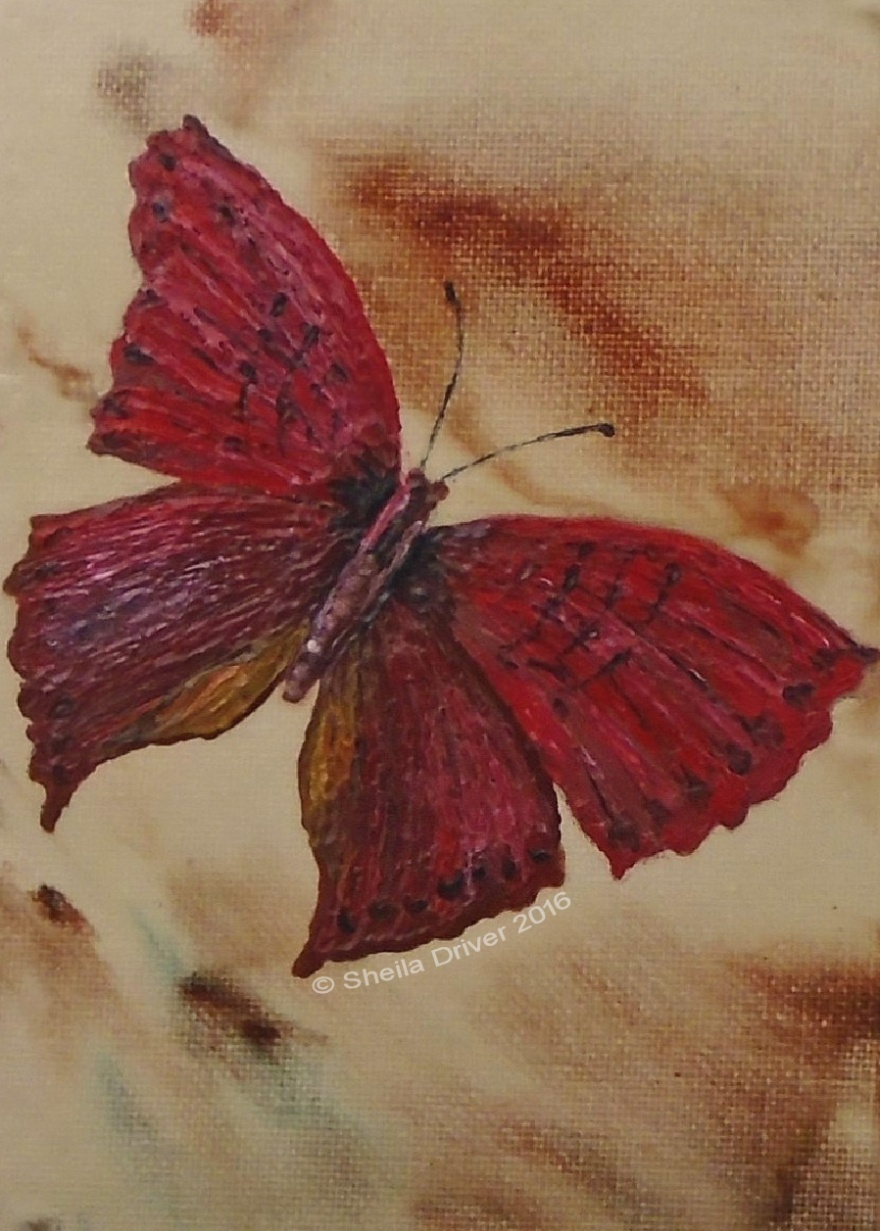 """Day 1: """"Butterfly"""""""