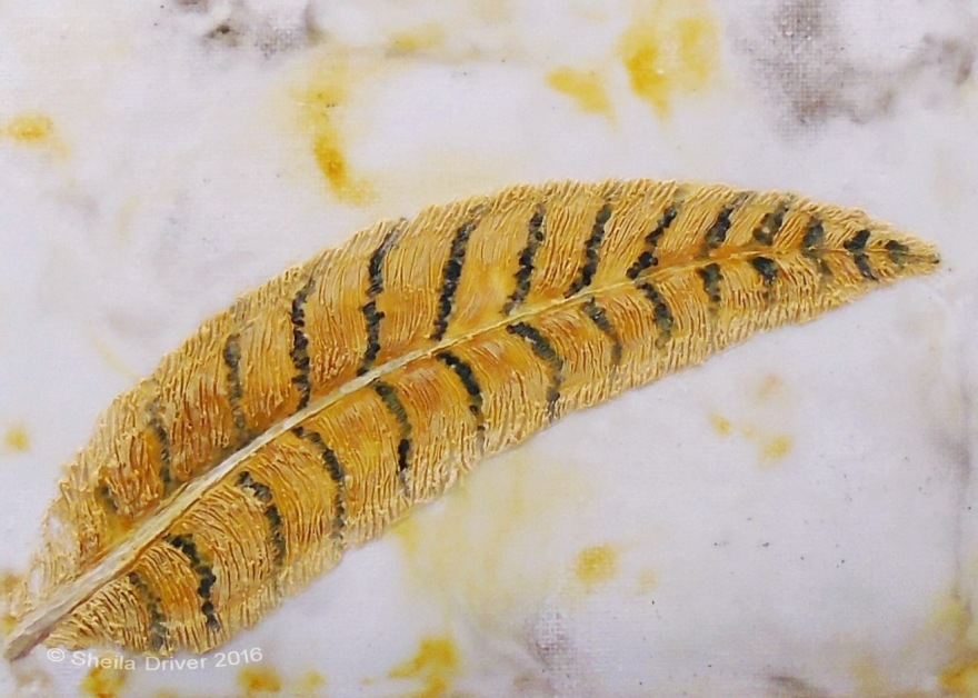 """Day 5: """"Pheasant Feather"""""""