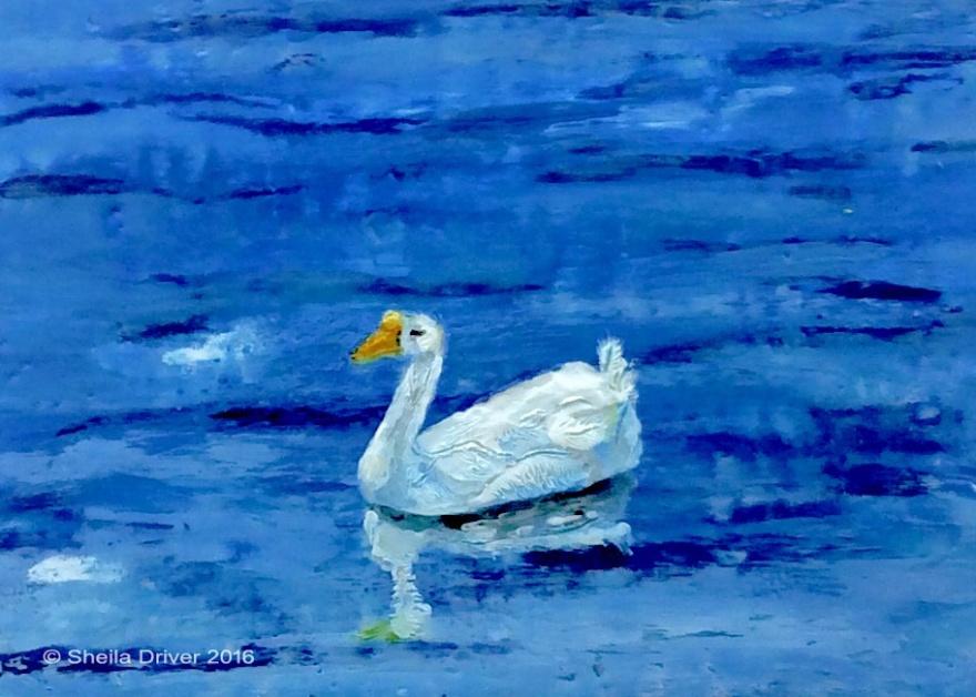 "Day 10: ""Swan Goose on the Avon"""